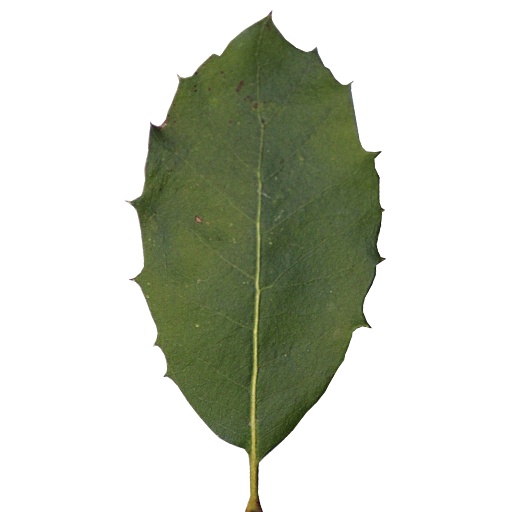 Collada/_Arbres/images/leaf_green_2_by_cgdreamer_d9wbawz.png