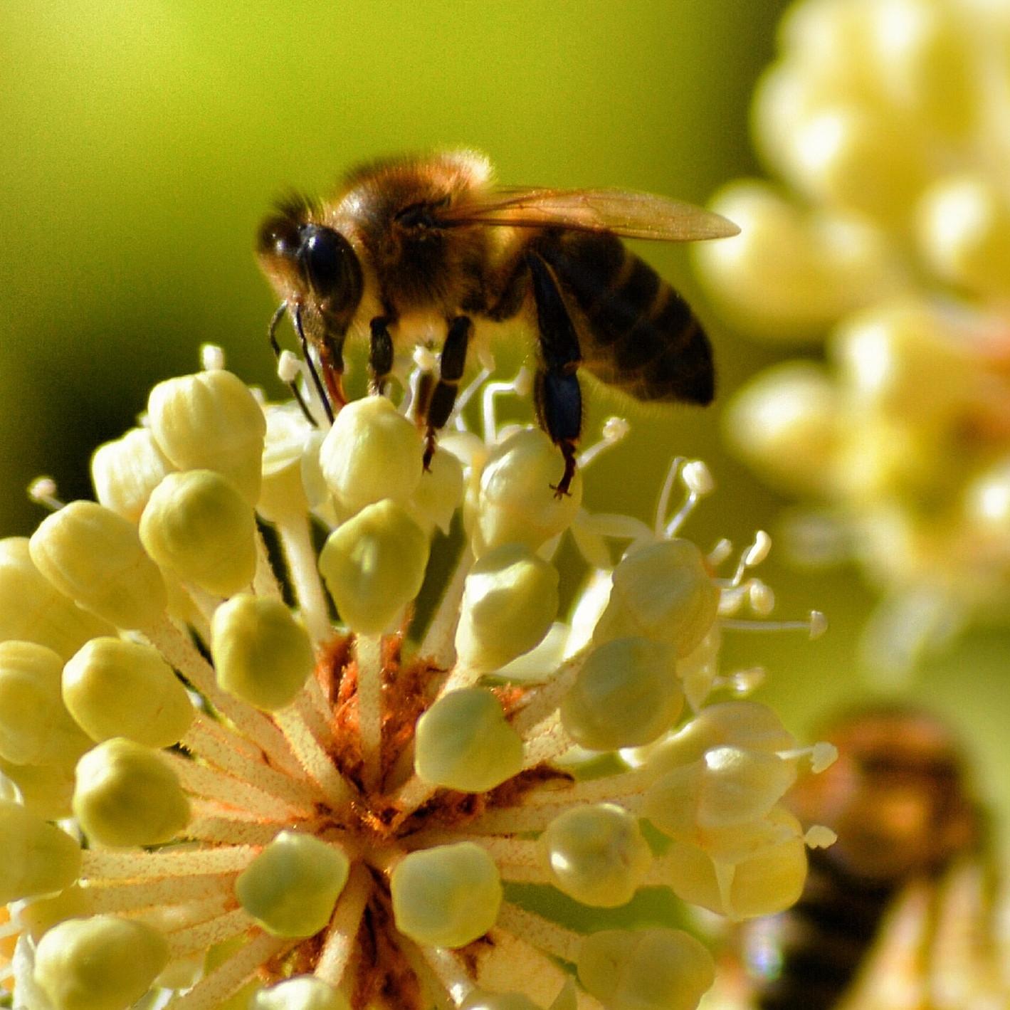 1-le-miel/images/bee2.jpg