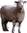 img/mouton-mini.png